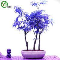 tohum türü toptan satış-Bonsai ağacı MAPLE bitki tohumları 100% gerçek tohum ayni çekim ev bahçe tesisi 20 parçacıklar / çanta