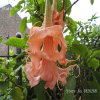 Wholesale Datura seeds Rare Flower Seeds DIY Home Garden plant Easy to Grow Particles Q034