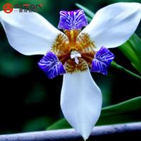 ingrosso fiore bianco iride-Vendita calda di colore bianco semi di orchidea iris semi di fiori perenni semi di iris - 100 pz