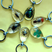 Wholesale Crab Mix - FREE SHIPPING 12pc real four leaf clover scorpion crab ant mix clear drop key-chains yqt002