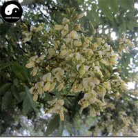 Tree Seeds black locusts - Buy Robinia Pseudoacacia Tree Seeds Plant False Acacia Grow Black Locust Ci Huai