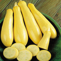 50+ Summer Squash Early Prolific Vegetable Seeds , Under The Sun plants