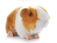 Wholesale High Hamster - Wholesale- High Quality 18CM Kawaii Adorable Cute Pet Simulation Hamster Plush Toys Guinea Pig Animals Guinea Pig Doll Ornaments Gifts