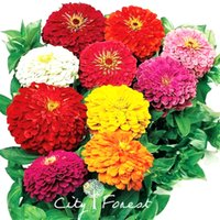Wholesale Giant Zinnia Double Blossom Flower Seeds Mix Color Hardy Drought tolerant Easy growing DIY Home Garden Bonsai Container Landscape