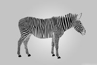 Wholesale zebra home decor - Zebra white and black Animal DIY 5D Diamond stitch Round 3D Diamond Stitch Tools Kit diamond mosaic Room Decor Without Frame
