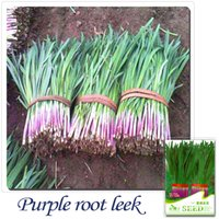Common organic seed garlic - Buy Get Can accumulate Pack Seeds Heirloom Organic Vegetable Purple Garlic Chives Leek Seeds C043