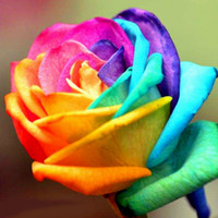 Wholesale New Rainbow Rose - New colorful rainbow rose flower seed 100 seeds china rare black rose flower special flower seeds wholesale