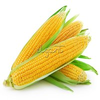 Sweet Waxy Yellow Corn Vegetable 50 Semi Easy-growing Non-GMO Heirloom Semi di ortaggi High Resa Delicious for Fresh, Canned or Frozen
