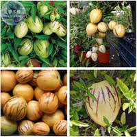 ingrosso semi di melone dolce-BELLFARM Solanum Muricatum Sweet Cetriolo Seeds, Professional Pack, pepino dulce melone pera frutta commestibile BD078H