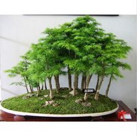 Casa Potted Juniper bonsai tree Semillas potted flores office bonsai purificar el aire absorber gases nocivos envío gratis