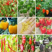 Wholesale Wholesale Red Peppers - Pepper Seed Courtyard 100 PCS 13 Varieties of Garden Vegetables and red Yellow Green Purple Black White Pepper Seeds