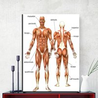 Wholesale art body figure - ZZ1852 Canvas Painting Wall Art Picture Human Anatomy Muscles System Art Canvas Poster Print Body Pictures for Medical Education
