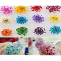 Wholesale Decorations Nails Flowers - 12PCS SET 12 Color Nail Dried Flowers Nail Art Decoration with Small Flowers for finger in stock wholesales