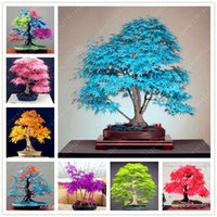 Wholesale Seed Wholesalers - tree seeds 20 maple seeds bonsai blue maple tree japanese maple seeds Balcony plants for home garden