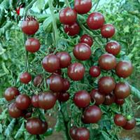 balkon sebze tohumları toptan satış-50 Adet / torba Siyah Kiraz Domates Tohumu Balkon Organik Meyve Tohum Sebze Saksı Bonsai Bitki Domates Tohumları ev bahçe için