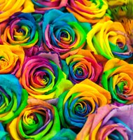Wholesale Sell Well Rainbow Rose Seeds Seeds Per Package Rainbow Color Garden Plants