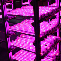Wholesale Smd 3528 Growing Plants - Wholesale led grow light 18w tube light lanp 1.2m T8 led Plant light red and blue ratio led lighting high quality farm Farm growth lighting