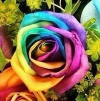 colorful rose seeds toptan satış-Yeni Varış Renkli Gökkuşağı Gül Tohumları * Paket Başına 60 Parça Tohumları * Sıcak Satış Bahçe Bitkileri Ücretsiz Nakliye