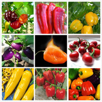 Wholesale Red Hot Chilli Peppers - 100 pc Color purple orange red Chilli Pepper Plant Vegetable seeds - each 100 pcs Seeds- Extremely Hot ! for home & garden