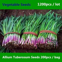 oriental herbs - Chinese Chives Allium Tuberosum Seeds For Planting Perennial Herbs Vegetable Seeds Chinese Leek Oriental Garlic Seeds