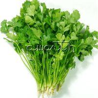 семена травы оптовых-Coriander Cilantro Coriandrum sativum NON-GMO Herb 200 семян Для посадки легко растущих фамильных овощных ароматных кулинарных растений