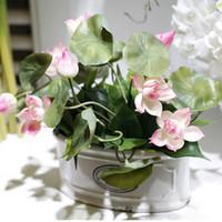 Wholesale Display Bowl - 2017 new bowl lotus plant lotus plant potted bonsai family, beautiful lotus bonsai flower arrangement free shipping