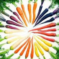 ingrosso semi di verdure cinesi-50 semi / pack Bonsai Rainbow Carota Rara semi di ortaggi cinesi: zucchero biologico sano
