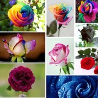Wholesale Rainbow Rose Seeds seeds Bag colors Garden planting Beautiful Flowers germ pink blue black green Rose Seed Wedding decorations