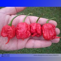 Wholesale Vegetable Bags Fresh - 100pcs bag New Rare Chili seeds Ghost Pepper Seeds India Style Bhut Jolokia Seeds Vegetables fresh rare