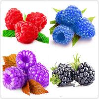 ingrosso organic fruit-500 pz Rare Raspberry Organic Fruit (Rubus Corchorifolius) Semi Verde Rosso Blu Viola Nero Semi di Lampone Per La Casa Giardino Piante
