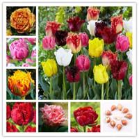ingrosso piantare piante di tulipani-wholesale4 pcs Miscelazione di bulbi di tulipano, fiore di tulipano, (non semi di tulipano), bulbi da fiore pianta bonsai