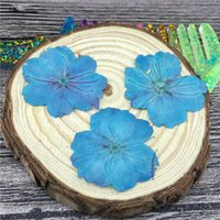 oriental flower art - Blue Oriental Cherry Press Dried Flower For Party Decoration Art Painting And Teaching Specimen