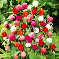 Wholesale easy grow flowers resale online - Mixed Color Gomphrena Flower Seeds Easy to grow Real Seeds for Planting DIY Home Garden