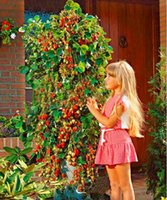 Wholesale 2017Climb a tree of strawberry seeds and fruits and vegetables seed potted garden seeds four seasons garden The four seasons can be h