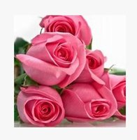 Wholesale Pink Lady Rose Seeds Pieces Seeds Per Package New Arrival Ombre Charming Garden Plants