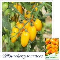 Common orange tomato seeds - Buy Get Can accumulate Pack Seeds Heirloom Healthy Organic Vegetable Orange Cherry Tomatoes Seeds C023