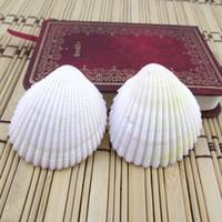 k aufkleber großhandel-Puka Shell Savageness Conch Windspiel Teile Jakobsmuschel Scheiben Kauri Wandaufkleber Raum Ornament Muscheln Direkt Deal 0 5zc C