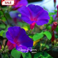 Wholesale glory flower - New Fresh Seeds Purple Ipomoea Nil Seeds Morning Glory seeds Flowering Plants Charming Chinese Flowers, 30 Pcs bag