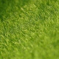 Wholesale Grass Free Lawn - 15 x 15 cm Aritificial Home Garden Decor Grass Lawn Turf DIY ZAKKA Moss Bonsai Ornament Free Shipping
