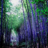 ingrosso fortunati piante di bambù-Un pacchetto 60 pezzi semi di semi di bambù viola rari giardino decorativo piante di bambù di bambù fortunato semi
