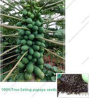 blumensamen stiefmütterchen großhandel-100% echte Papayasamen (Carica Papaya). zwerg organische süße papaya samen in Bonsai, 15 teile / beutel Seltene obst samen essbare Carica papaya