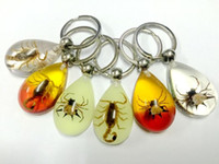 Wholesale Insect Collection - free shipping yqtdmy 12 pcs cool insect collection color drop bottom amulet Keychain