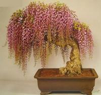 ingrosso semi di albero coperti-Trasporto libero, semi di glicine 10 semi / pack rare mini bonsai albero semi di glicine piante ornamentali per interni