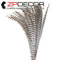 Wholesale Ems Express Shipping - ZPDECOR Longer Size 100 pieces lot Natural Color Zebra Lady Amherst Pheasant Feathers Free Shipping by Express(EMS or DHL)