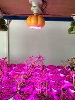 Wholesale Paper Lanterns Red - LED Paper Pumpkin Lantern Spider Hanging Lantern Light Halloween Festival Deco led plant grow light,led grow light for medical plant lights