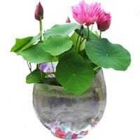 nelumbo tohumları toptan satış-10 tohumlar / paketi Balkon topraksız bonsai nelumbo nucifera tohumları hidrofte tohumları lotus çiçeği tohumu