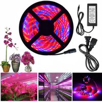Wholesale Apollo Grow - LED Grow Light Full Spectrum DC 12V 5050 Aquarium Greenhouse Plant Growing Light Set + adapter hydroponic apollo phyto lamp
