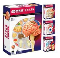Wholesale Medical Science Model - BOHS Human Body Skeleton Anatomy Skull Manikin Heart Anatomy Life Size Ear Model 4D Educational Puzzle Medical Science Doll Toys