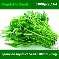 Wholesale Chinese Ipomoea Seeds For Planting Water Spinach Swamp Cabbage Annual Of Vegetable Seeds Much Loved Ipomoea Forsk Seed