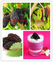 ingrosso semi di bacche-500 pezzi semi di gelso nero Morus Nigra Tree semi di frutti a bacca blu comprare direttamente dalla Cina